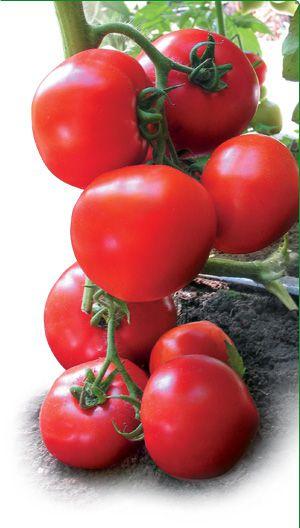 Семена детерминантных томатов купить семена низкорослых